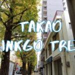 [Vlog] Ginkgo Trees in Takao | Tokyo Sightseeing, Japan