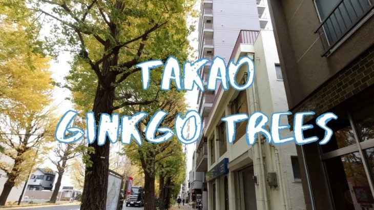 [Vlog] Ginkgo Trees in Takao | Tokyo Sightseeing, Japan