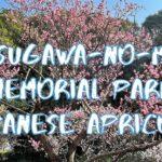 [Vlog] Arisugawa-no-miya Memorial Park with Japanese Apricots   Tokyo Sightseeing, Japan