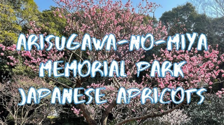 [Vlog] Arisugawa-no-miya Memorial Park with Japanese Apricots | Tokyo Sightseeing, Japan