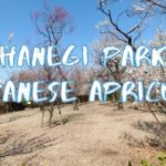 [Vlog] Hanegi Park with Japanese Apricots | Tokyo Sightseeing, Japan