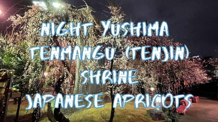 [Vlog] Night Yushima Tenmangu (Tenjin) Shrine with Japanese Apricots | Tokyo Sightseeing, Japan