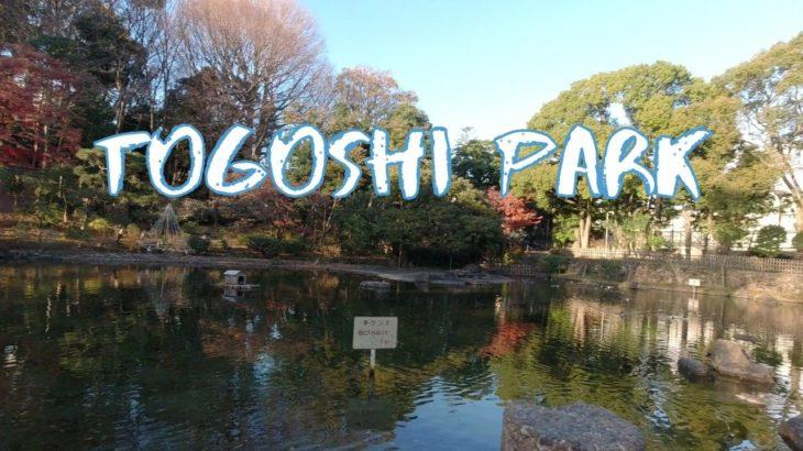 [Vlog] Togoshi Park with Autumn Leaves | Tokyo Sightseeing, Japan