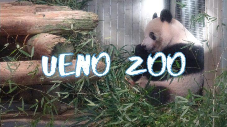 [Vlog] Ueno Zoo | Tokyo Sightseeing, Japan