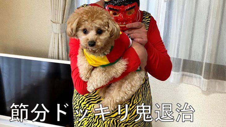 節分ドッキリでマルプーの鬼退治/Japanese culture on February.