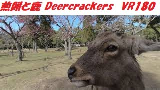 VR180 奈良 煎餅食べる 鹿 Japan Nara Deer eating rice crackers 3D動画
