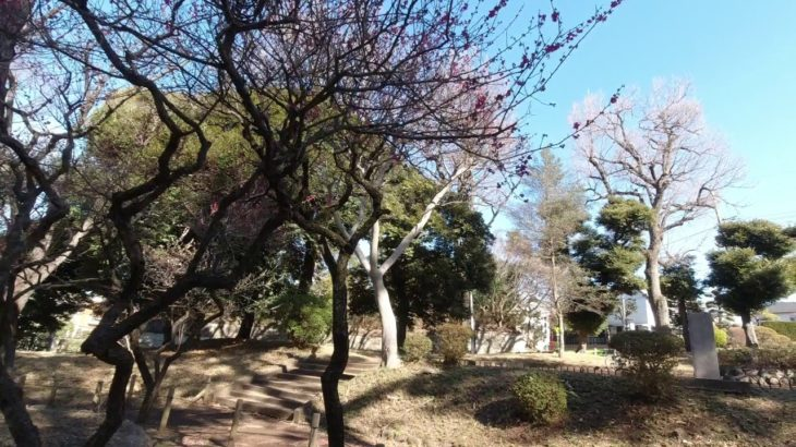 [Vlog] Horai Park with Japanese Apricots   Tokyo Sightseeing, Japan
