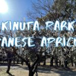 [Vlog] Kinuta Park with Japanese Apricots   Tokyo Sightseeing, Japan