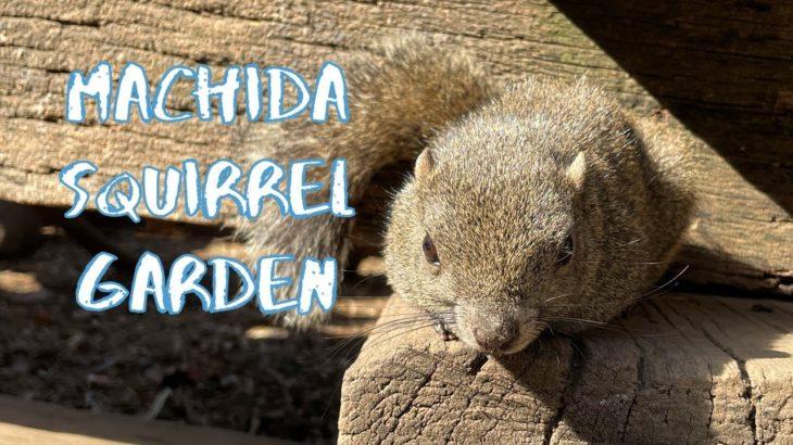 [Vlog] Machida Squirrel Garden | Tokyo Sightseeing, Japan