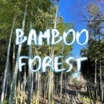 [Vlog] Suzume no Oyado Ryokuchi Park with Bamboo Forest   Tokyo Sightseeing, Japan