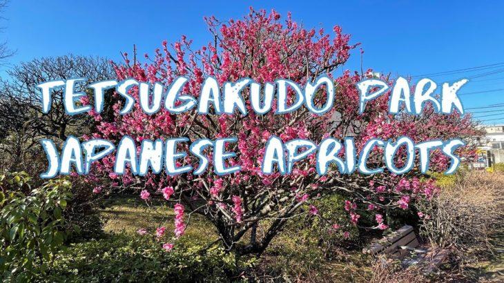 [Vlog] Tetsugakudo Park with Japanese Apricots | Tokyo Sightseeing, Japan