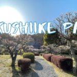 [Vlog] Yakushiike Park with Japanese Apricots | Tokyo Sightseeing, Japan