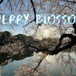 [Vlog] Chidorigafuchi Green Way with Cherry Blossoms | Tokyo Sightseeing, Japan