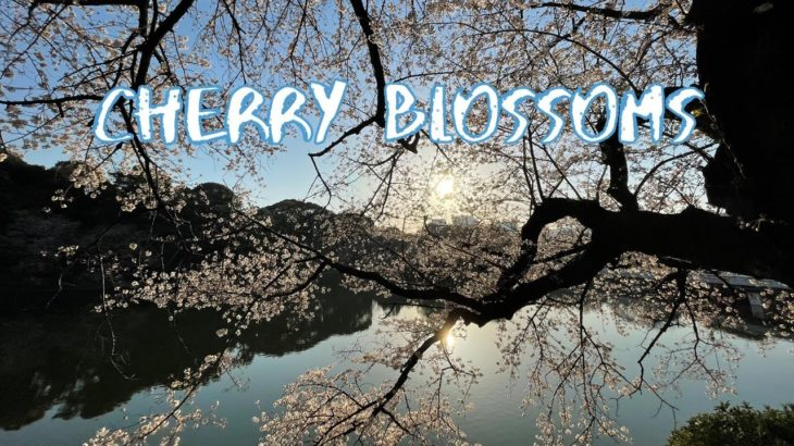 [Vlog] Chidorigafuchi Green Way with Cherry Blossoms | Tokyo Sightseeing, Japan
