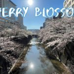[Vlog] Cycling along Shakujii River with Cherry Blossoms | Tokyo Sightseeing, Japan