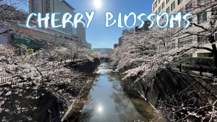 [Vlog] Cycling along Shakujii River with Cherry Blossoms   Tokyo Sightseeing, Japan