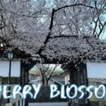 [Vlog] Cycling in Kitanomaru Park with Cherry Blossoms | Tokyo Sightseeing, Japan