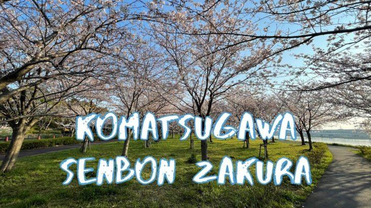 [Vlog] Cycling in Komatsugawa Senbon Zakura with Cherry Blossoms | Tokyo Sightseeing, Japan