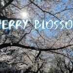 [Vlog] Cycling in Sotobori Park with Cherry Blossoms   Tokyo Sightseeing, Japan