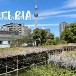 [Vlog] Kameido Tenjin Shrine with Wisteria   Tokyo Sightseeing, Japan