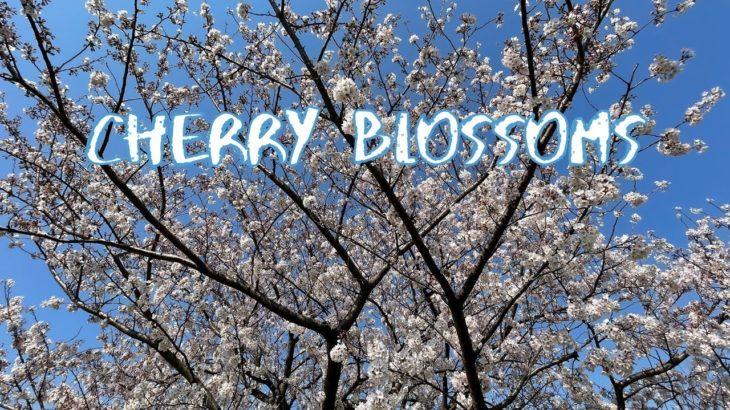 [Vlog] Nagisa Park with Cherry Blossoms | Tokyo Sightseeing, Japan