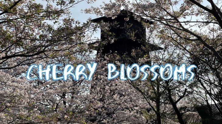[Vlog] Shinkawa Nishi Suimon Hiroba Plaza with Cherry Blossoms | Tokyo Sightseeing, Japan