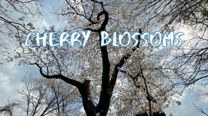 [Vlog] Todoroki Keikoku Valley with Cherry Blossoms   Tokyo Sightseeing, Japan