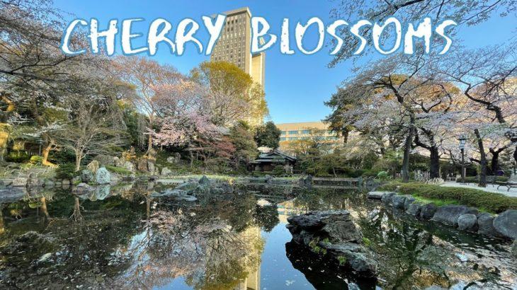 [Vlog] Yasukuni Jinja Shrine with Cherry Blossoms | Tokyo Sightseeing, Japan