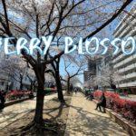 [Vlog] Cycling in Harimazaka Sakura Namiki with Cherry Blossoms | Tokyo Sightseeing, Japan