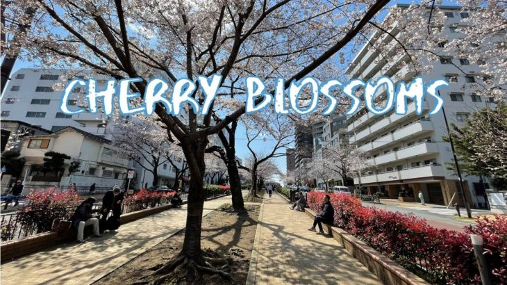 [Vlog] Cycling in Harimazaka Sakura Namiki with Cherry Blossoms | Tokyo Sightseeing, Japan