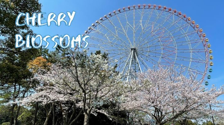[Vlog] Cycling in Kasai Rinkai Park with Cherry Blossoms   Tokyo Sightseeing, Japan