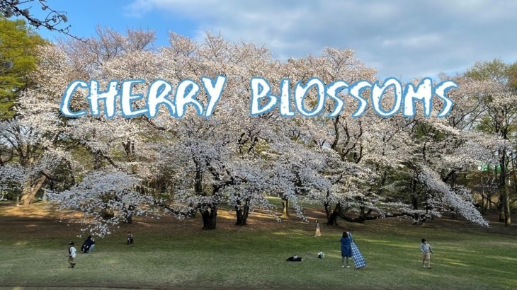 [Vlog] Cycling in Kinuta Park with Cherry Blossoms | Tokyo Sightseeing, Japan