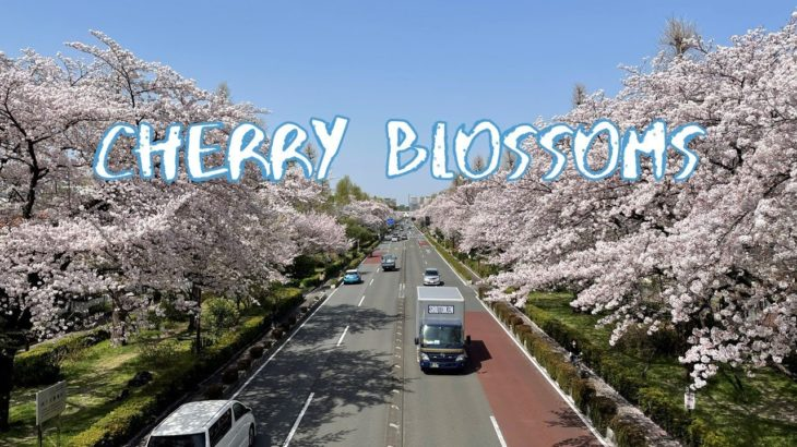 [Vlog] Cycling in Kunitachi with Cherry Blossoms | Tokyo Sightseeing, Japan