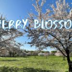 [Vlog] Cycling in Toneri Park with Cherry Blossoms   Tokyo Sightseeing, Japan