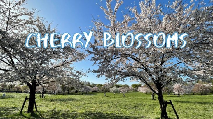 [Vlog] Cycling in Toneri Park with Cherry Blossoms | Tokyo Sightseeing, Japan