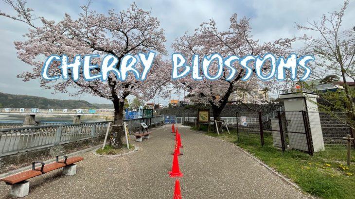 [Vlog] Hamura Shusuiseki with Cherry Blossoms | Tokyo Sightseeing, Japan