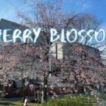[Vlog] Hibiya Park with Cherry Blossoms   Tokyo Sightseeing, Japan