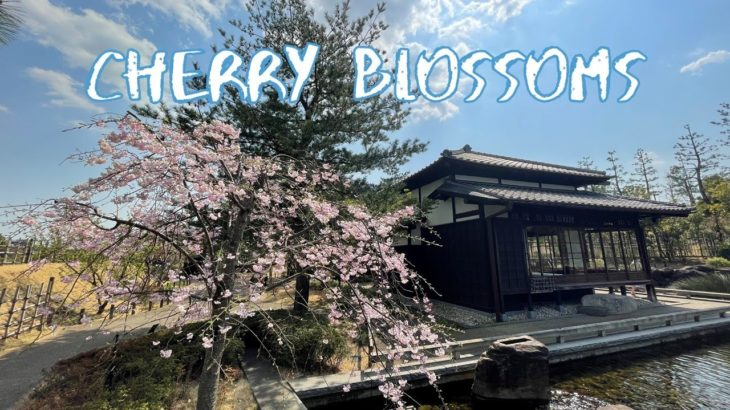 [Vlog] Kishinen Garden with Cherry Blossoms | Tokyo Sightseeing, Japan