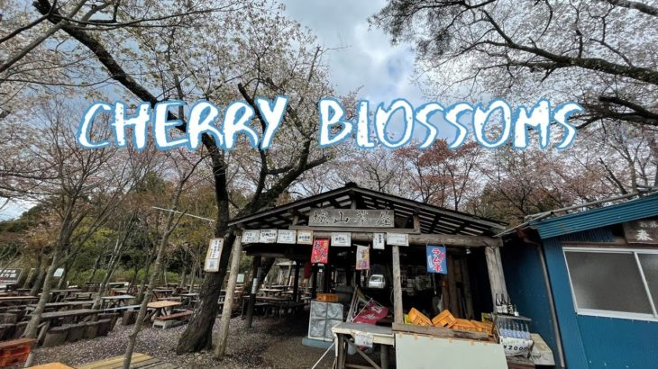 [Vlog] Mt Takao Hiking with Cherry Blossoms   Tokyo Sightseeing, Japan