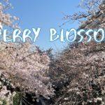 [Vlog] Green Paths for Walking (Nomigawa River and Kakinokizaka Course) | Tokyo Sightseeing, Japan
