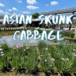 [Vlog] Horikiri Shobuen Iris Garden with Asian Skunk Cabbage | Tokyo Sightseeing, Japan