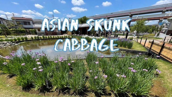 [Vlog] Horikiri Shobuen Iris Garden with Asian Skunk Cabbage   Tokyo Sightseeing, Japan