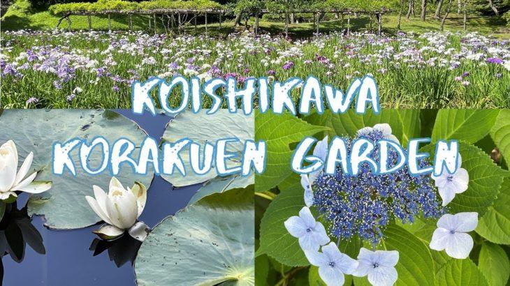 [Vlog] Koishikawa Korakuen Garden with Hydrangeas and Japanese Irises | Tokyo Sightseeing, Japan