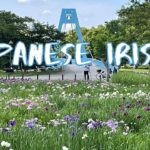 [Vlog] Mizumoto Park with Japanese Irises   Tokyo Sightseeing, Japan