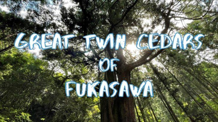 [Vlog] Sennen-no-Chigirisugi (Great Twin Cedars of Fukasawa) | Tokyo Sightseeing, Japan
