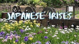 [Vlog] Shobunuma Park with Japanese Irises | Tokyo Sightseeing, Japan