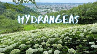 [Vlog] Wonderful Nature Village with Hydrangeas   Tokyo Sightseeing, Japan