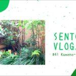 【sento vlog.】#41♨️Kameno-yu(亀の湯) 銭湯 Bath house Japanese traditional culture 江東区 bgm