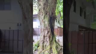 遠隔参拝 神社巡り Japanese culture