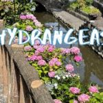 [Vlog] Cycling in Furukawa Water Park with Hydrangeas   Tokyo Sightseeing, Japan